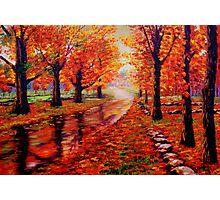 Rainy Maple Road Photographic Print