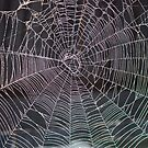 The Web - NSW by CasPhotography