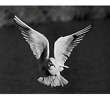 Angel Gull Photographic Print