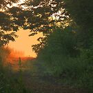 Hazy Summer Morning Path by reindeer