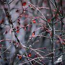 Winter's Breath by AshtonR26