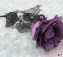 Purple Rose by Christopher Johnson