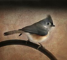 Textured Titmouse by Lori Deiter