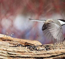 Fly thru - Drive thru Chickadee by Renee Dawson