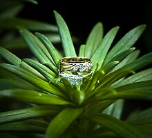 Formal wedding ring resting in the grass. by Prominence
