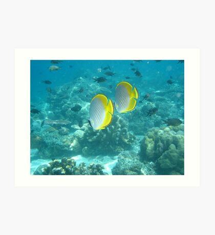 Philippine Butterflyfish Art Print