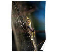 Golden orb spider - Australia Poster
