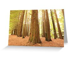 Californian Redwoods, Otways National Park, Australia Greeting Card