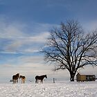Horses Standing in the Snow by Mark Van Scyoc