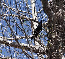 A Crow in the Tree by LSchultheis
