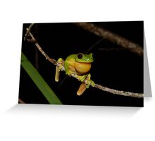 Australian Red Eyed Tree Frog Greeting Card