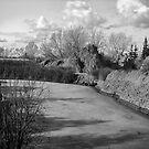 The Calgary Zoo Landscape by Ellen Cotton