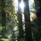 """""""Sun Rays"""" by Lynn Bawden"""