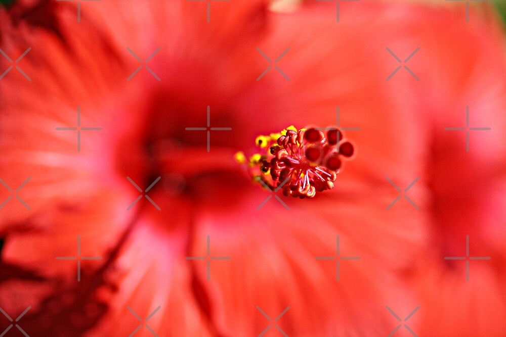 Red Hibiscus 1 by TeAnne
