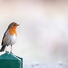 Winter Robin by Sarah-fiona Helme