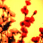 Red flowers in a blurry yellow world by Mark Malinowski