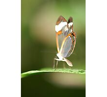 Grey Butterfly Photographic Print