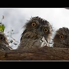 What you lookin' at??? by Samantha Cole-Surjan