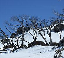 Snow blue, Snowy Mountains, NSW by Caroline Crawford