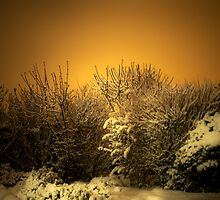 Snowy by Svetlana Sewell