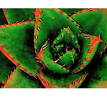 Green Succulent Photographic Print