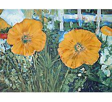 Yellow Poppies Photographic Print