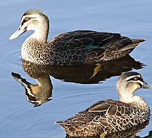MR&MRS DUCK by Rick Playle