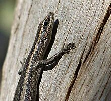 little Skink by Rick Playle