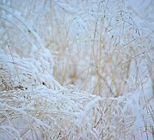 Frosty grass by Paola Svensson