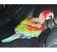 macaw 8 weeks Photographic Print