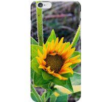 Wild Flower Last Light iPhone Case/Skin