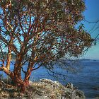 Arbutus View by NancyR
