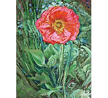 Pink Poppy Photographic Print