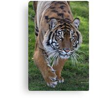 Tiger Stalk Canvas Print