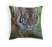 Tiger Stalk Throw Pillow