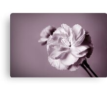 Carnations, BW Canvas Print