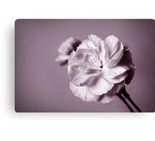 Carnations, BW Canvas Print