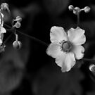 Flowers in Black and White by Edward Myers