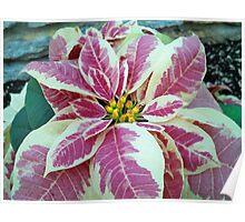 Seasons Greeting Holiday Flower Poster