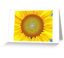 Beautiful sunflower of summer Greeting Card