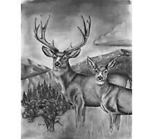 Idaho's Mule Deer Heaven Photographic Print