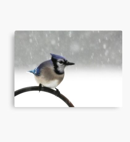 Blue Jay in a Blizzard Canvas Print
