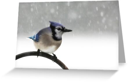 Blue Jay in a Blizzard by Lori Deiter