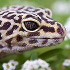 Garden Gecko by Sue  Cullumber