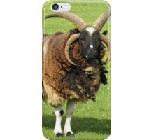 Four Horned Sheep iPhone Case/Skin