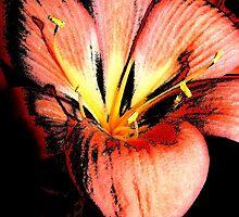 floral 1401 by Chuck Landskroner