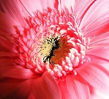 floral 41 by Chuck Landskroner