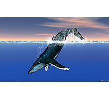 Humpback Whale Photographic Print