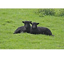 Baa Baa Black Sheep Photographic Print