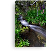 Little Lupin Creek Canvas Print